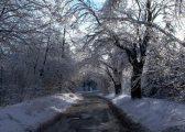 Január (fotó: Vimola Ágnes)