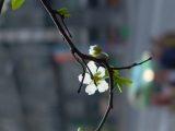 Virág(fotó: Vimola Ágnes)