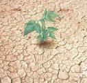 Kakasy Éva: Az elsivatagosodás és kiszáradás elleni küzdelem