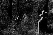 A budakalászi régi temető (fotó: Legeza Dénes István)