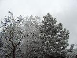 Zúzmarás fák (fotó: Bálint Eszter)