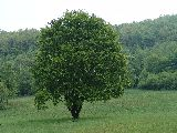 Zöldellés (fotó: Káldos János)