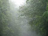 Májusi köd a Mátrában (fotó: Káldos János)