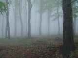 """A mese erdeje ködben"""" – Mátra (fotó: Káldos János)"""