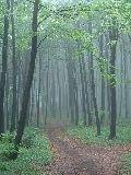 Az ösvény (fotó: Káldos János)