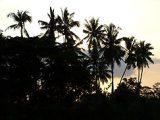 Pálmafák Balin (Indonézia)(Fotó: Konkoly-Thege                         György)