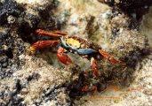 Egzotikus állat (Galapagosz)(fotó: Konkoly-Thege                         György)