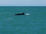 Izlandi bálna(Fotó: Konkoly-Thege György)