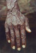 Öreg kéz (India)(fotó: Konkoly-Thege György)