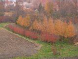 Őszi színek (Fotó: Vimola Ágnes)