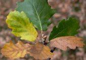 Őszi levelek (Fotó: Vimola Ágnes)