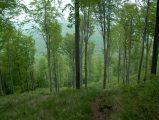 Tavaszi erdőDobogókő (fotó: Vimola Ágnes)