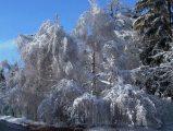 TélSzéchenyi-hegy(fotó: Vimola Ágnes)