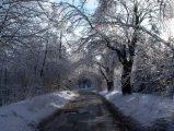 Téli útSzéchenyi-hegy(fotó: Vimola Ágnes)