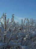 Jéggombóc - Budai hegyek (Fotó: Vimola Ágnes)