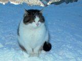 Macska                         (Fotó: Vimola Ágnes)