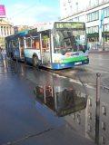 Eső után(fotó: Vimola Ágnes)