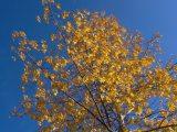Sárga-kék(fotó: Vimola Ágnes)