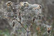 Pókháló(fotó: Vimola Ágnes)