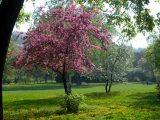 Virágzás(fotó: Vimola Ágnes)