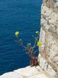Virágszál – egyedül(fotó: Vimola Ágnes)