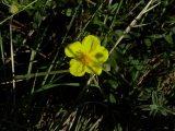 Kis virág a napsütésben (fotó: Vimola Ágnes)