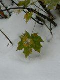 Korai tél(fotó: Perdy-Fazakas Brigitte)