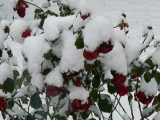 Friss hó(fotó: Perdy-Fazakas Brigitte)