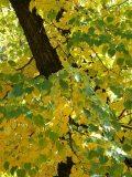 Az ősz színei(fotó: Perdy-Fazakas Brigitte)