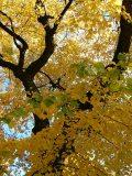 Novemberi verőfény (fotó: Perdy-Fazakas Brigitte)