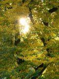Őszi nap(fotó: Perdy-Fazakas Brigitte)