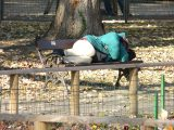 Hajléktalan ember 2006-ban (Fotó: Vimola Ágnes)