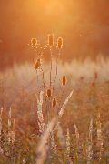 Őszi naplemente – Örség, Templomszer(fotó: Török Máté)