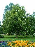 Park a balatonszárszói parton(fotó: Bánkeszi Katalin)