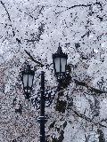 Téli szépség(fotó: Káldos János)